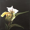 Lady Slipper (Orchid)
